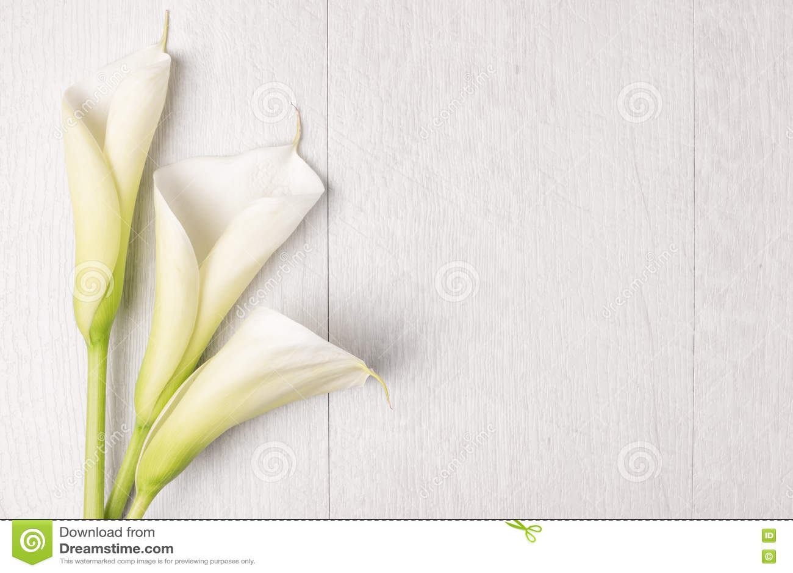 Elegancki wiosna kwiat, kalii leluja