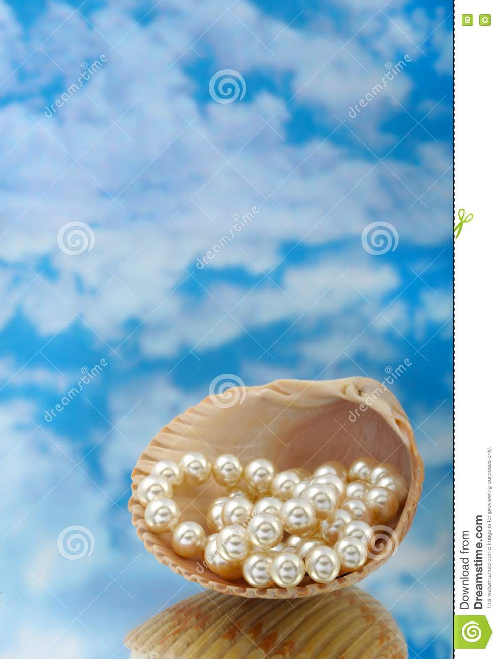 Elegant Pearls In Shell Stock Photo Image Of Necklace