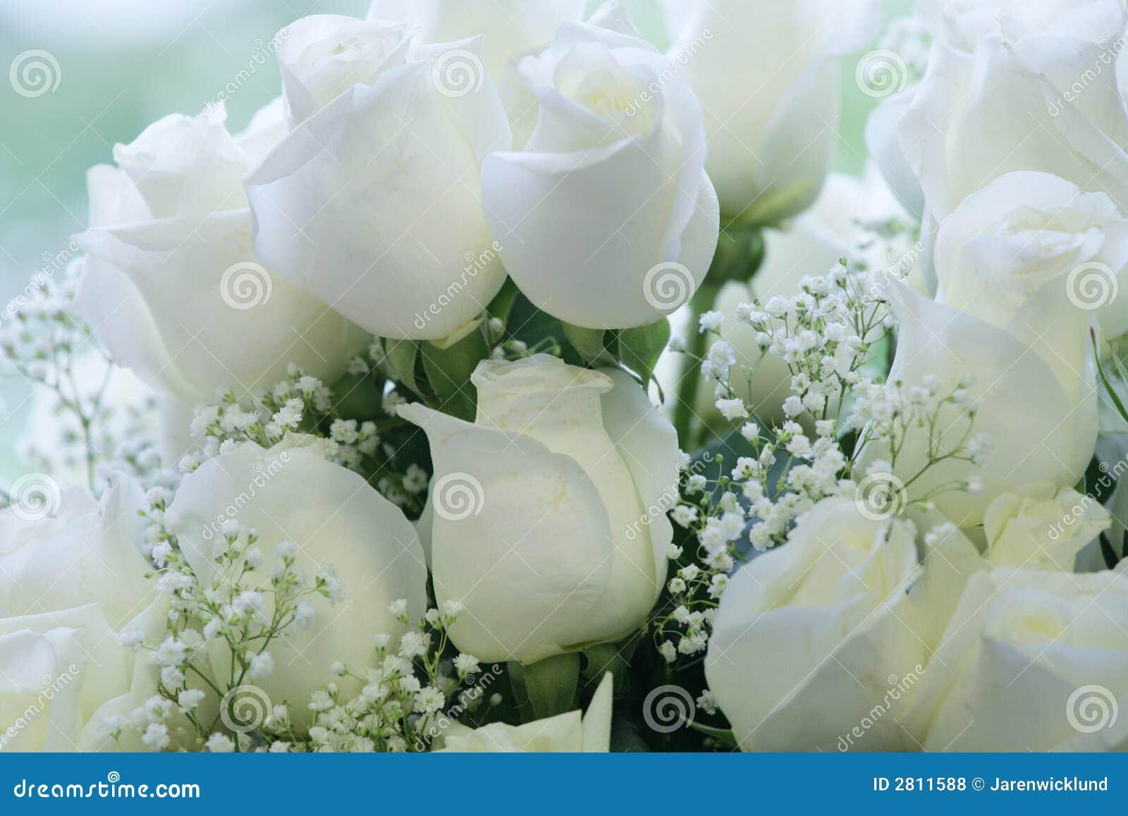 Elegant Pure White Roses Stock Photo Image Of Elegance 2811588