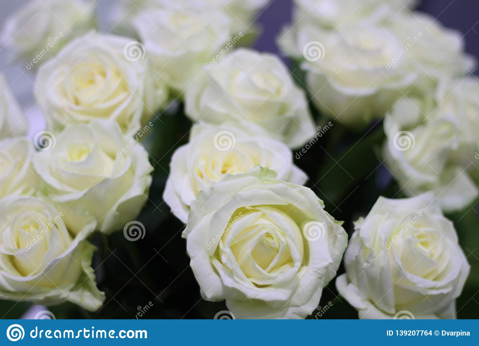 White rose dating site   Peninsula Dance Academy