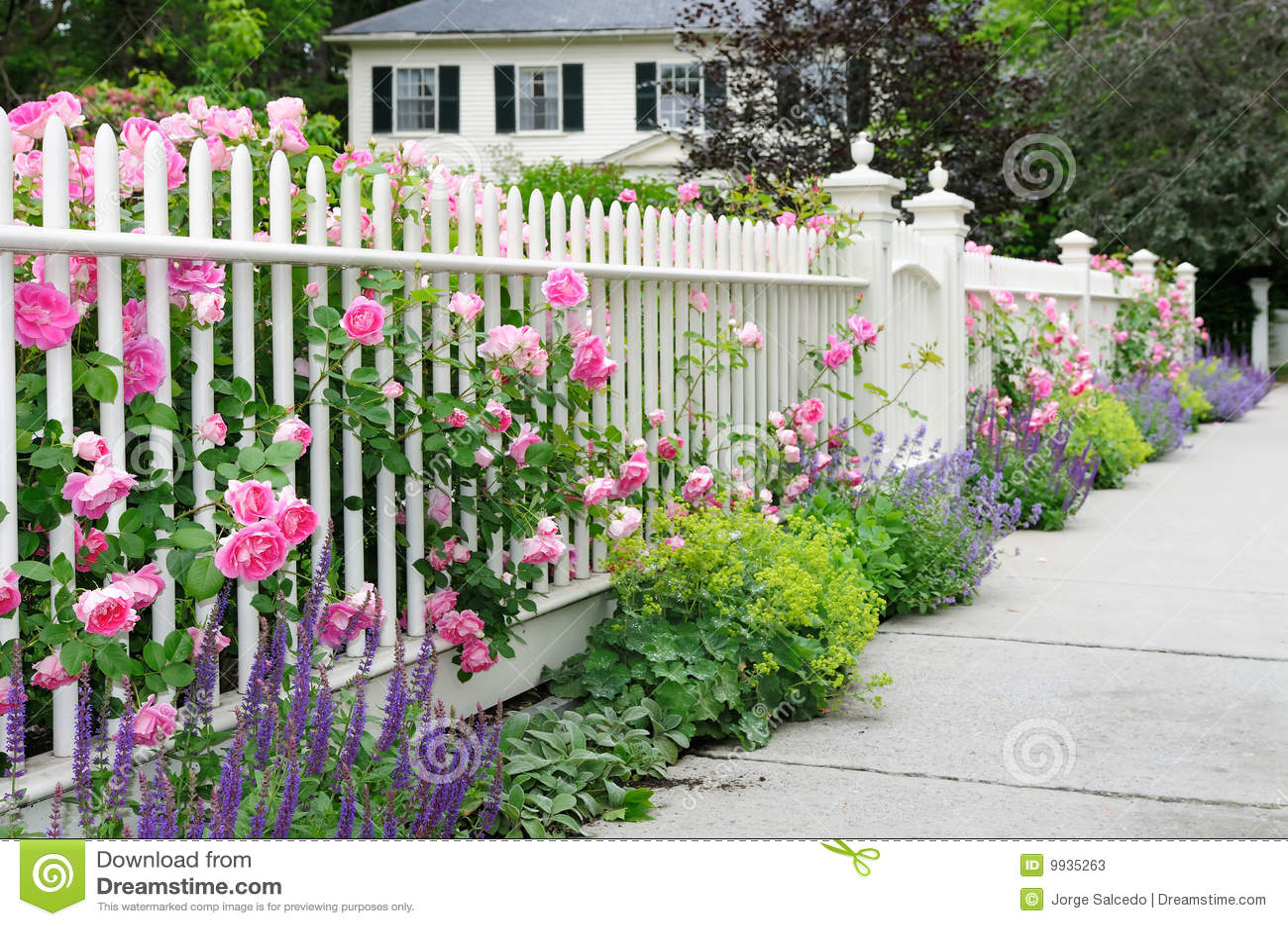 Eleganter Garten Zaun Mit Rosen Stockbild Bild