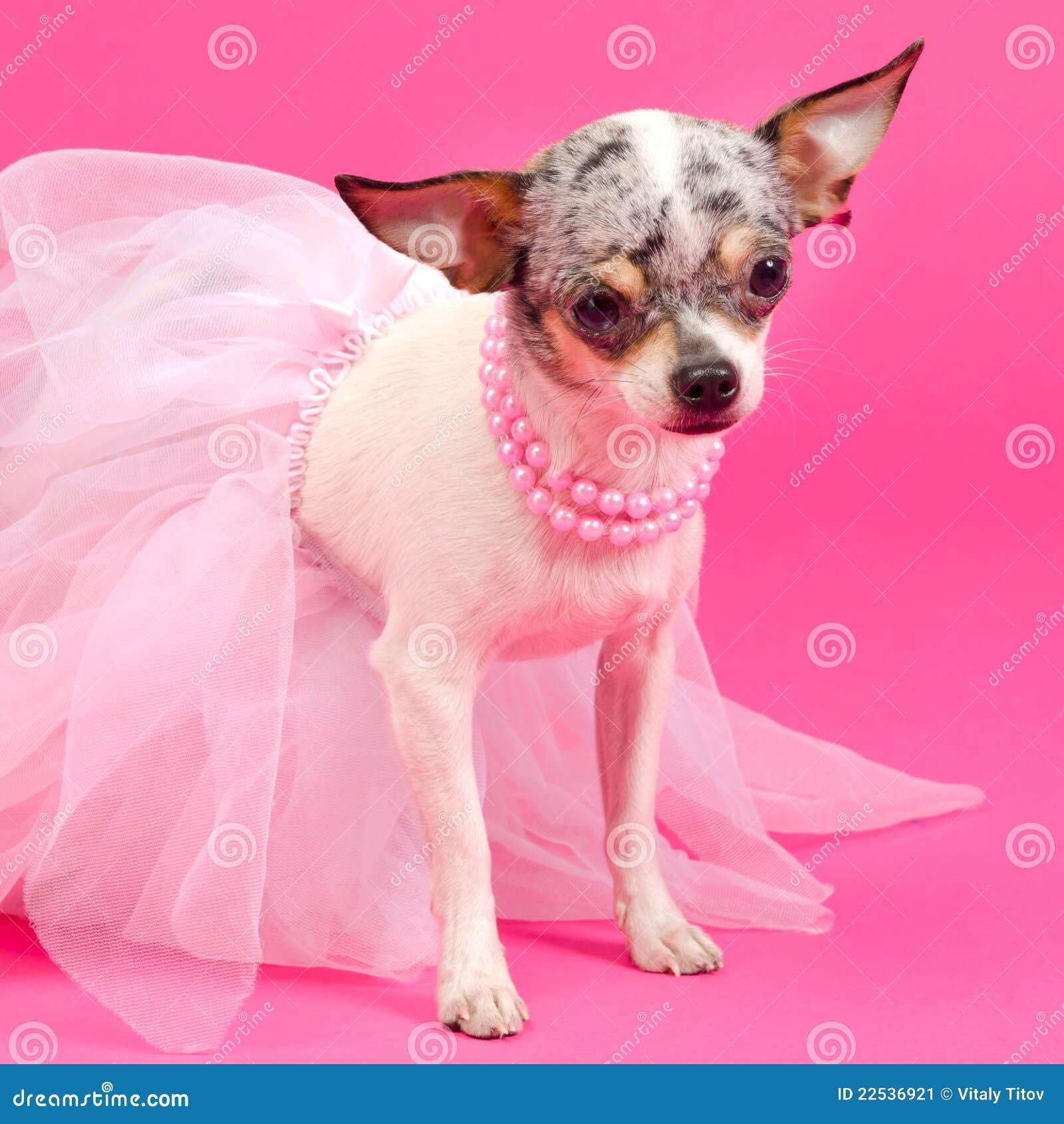 Elegantt mycket litet för hund