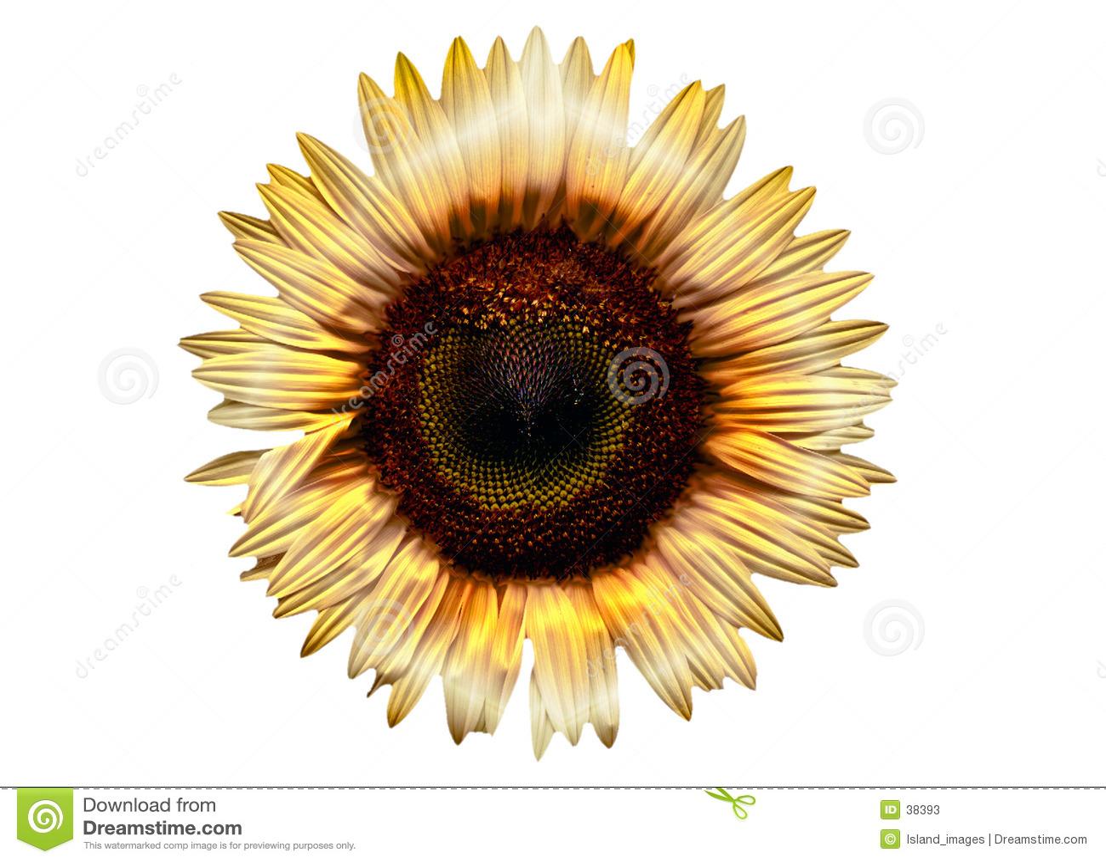 Elektrische Sonnenblume