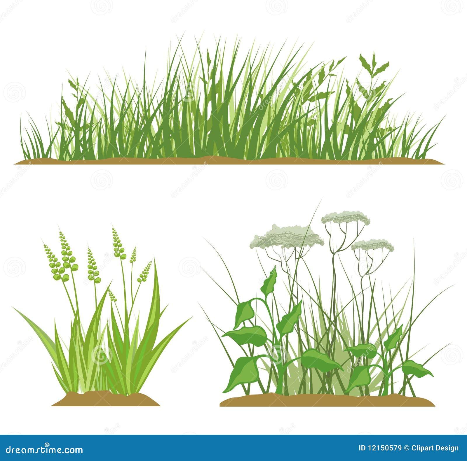 Elementi di disegno dell 39 erba illustrazione di stock - Erba da giardino resistente ...