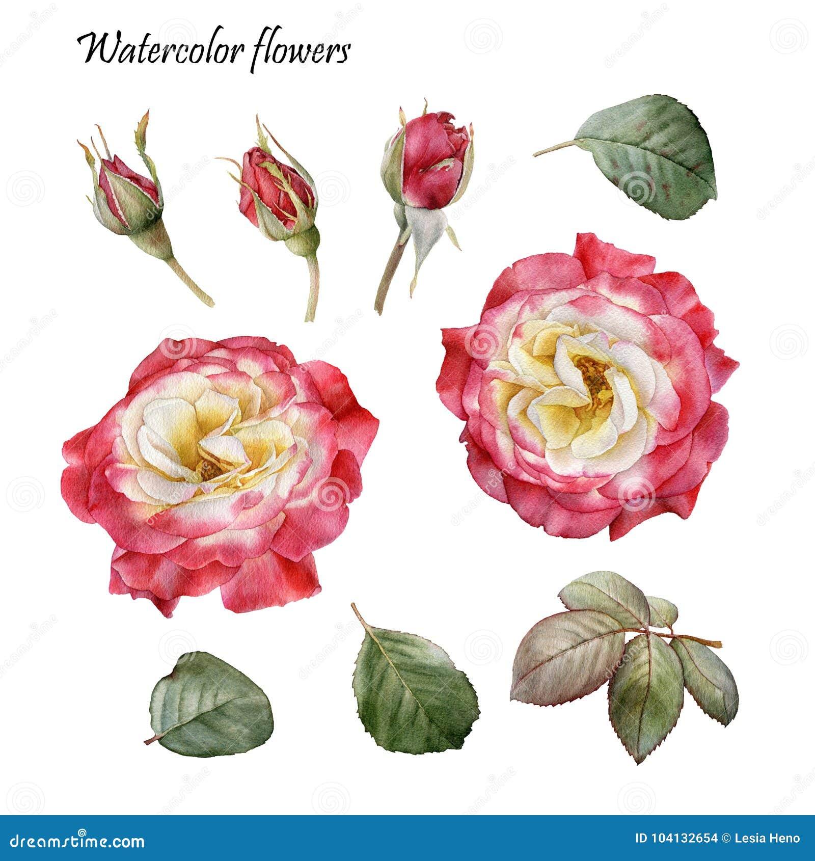 Elementi Di Disegno Grafico Fiori Messi Delle Rose Rosse Dell