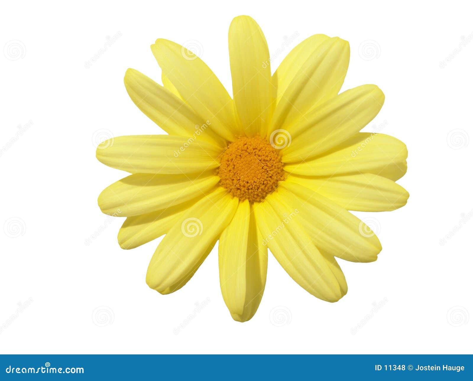 Elementi di disegno: Testa di fiore