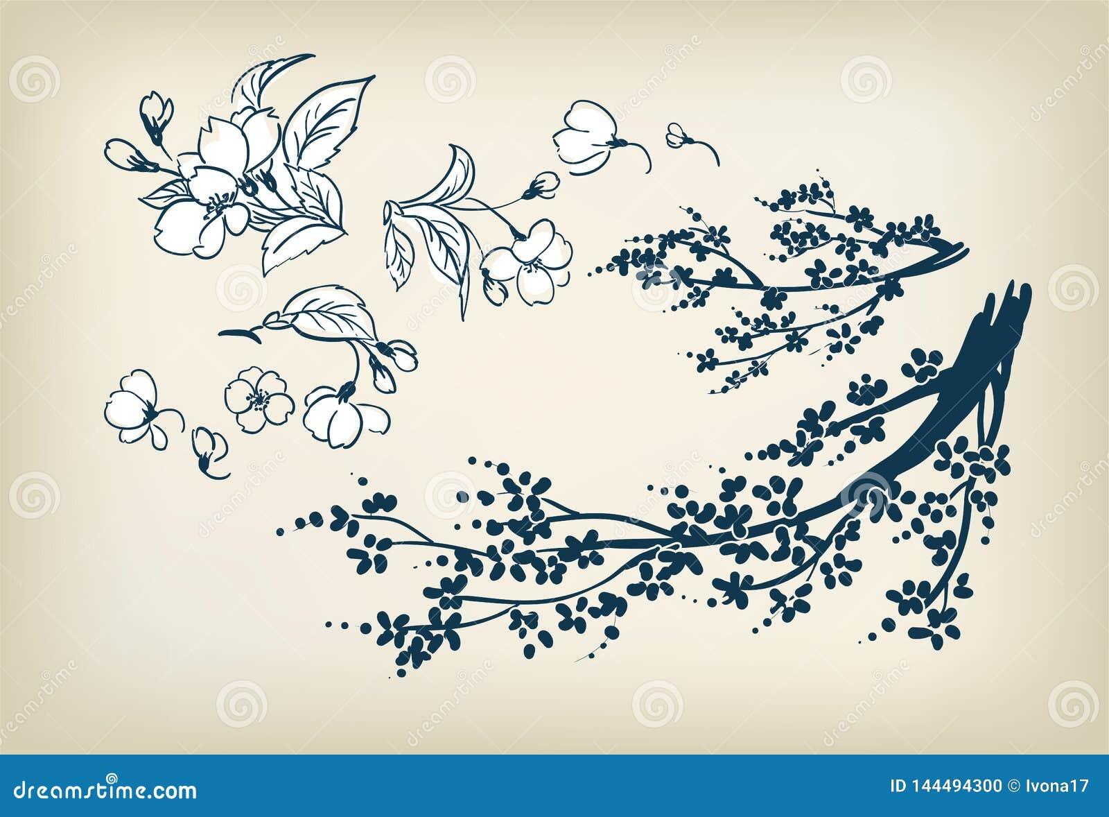 Elementi di progettazione dell illustrazione di schizzo di vettore di sakura del fiore di ciliegia