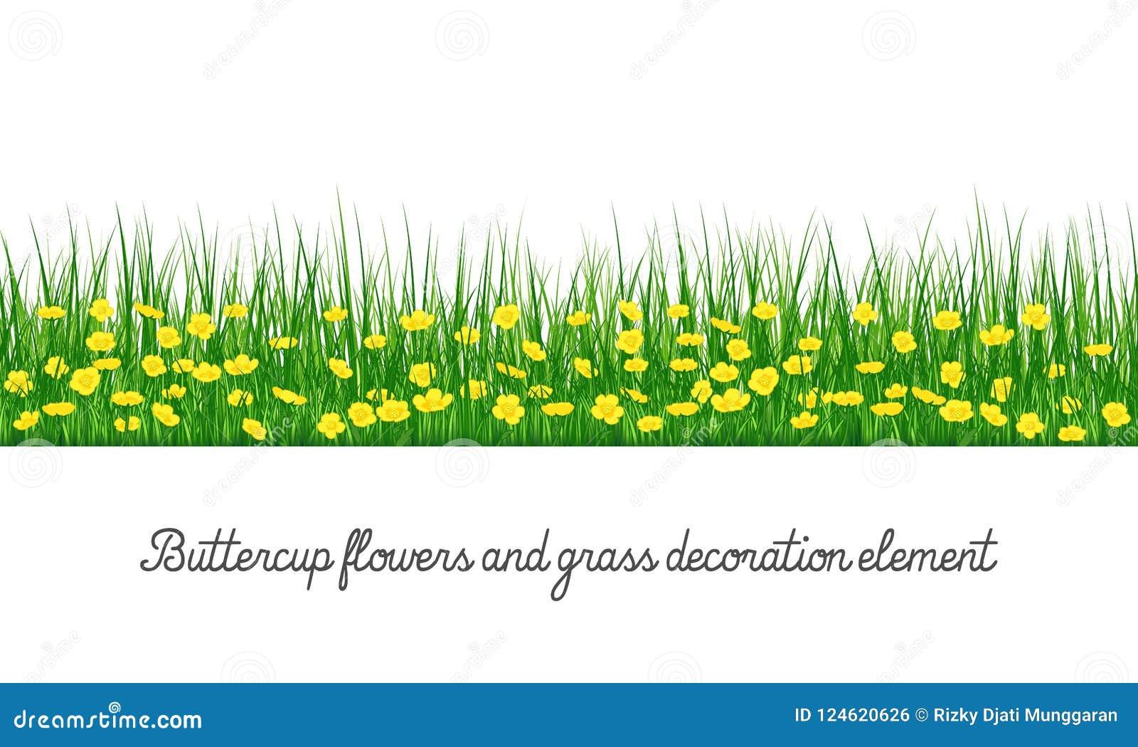 Elemento de la decoración del ranúnculo y de la hierba