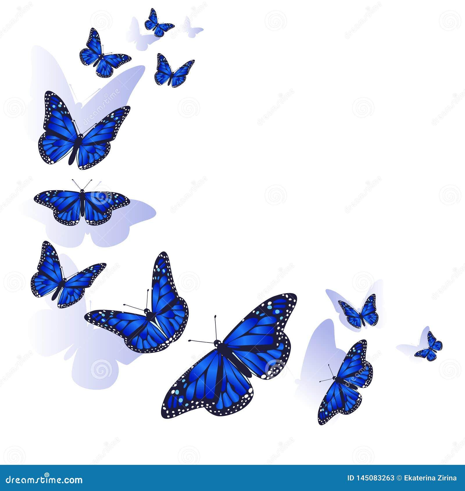 Elemento Del Disegno Pagina Fatta Delle Farfalle Farfalle Blu Su Una
