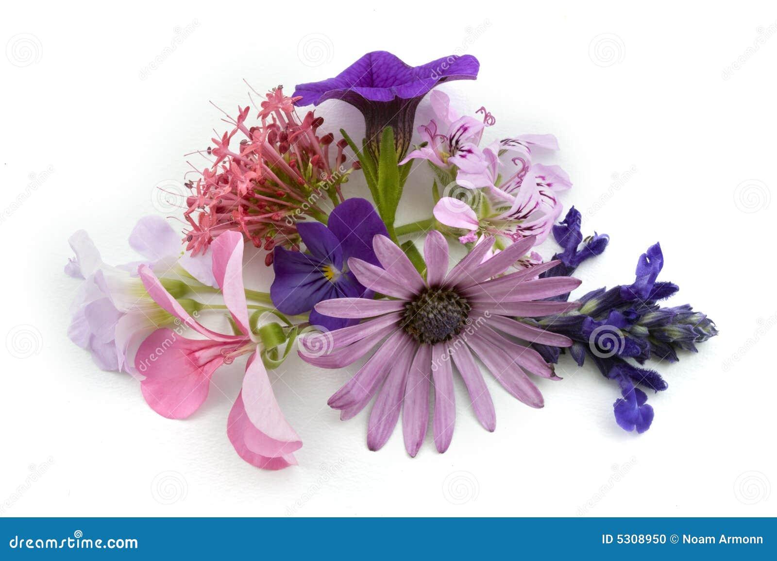Download Elemento Floreale Di Disegno Della Priorità Bassa Fotografia Stock - Immagine di florist, radura: 5308950