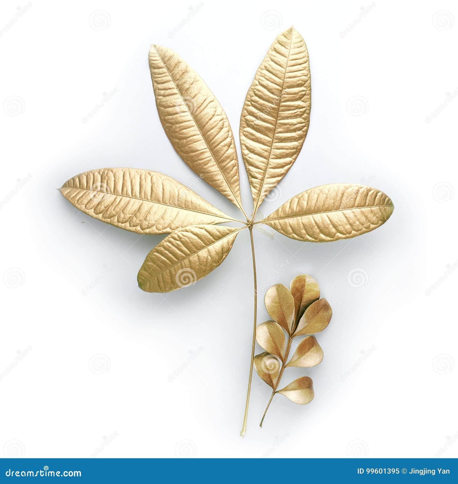 Elementos dourados do projeto da folha Elementos para o convite, cartões da decoração de casamento, dia de Valentim, cartões No b