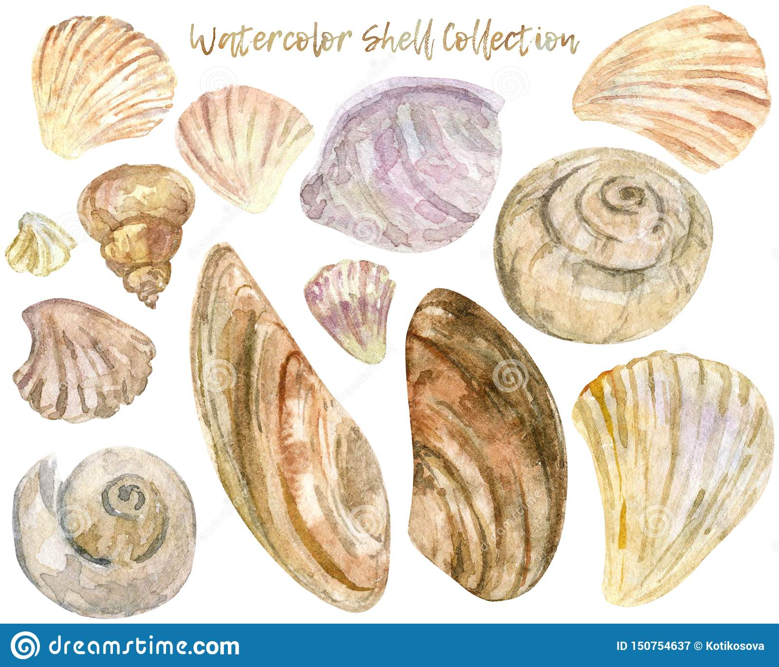Watercolor shell clip art collection