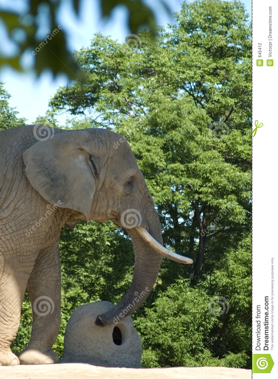 Adults only elephant