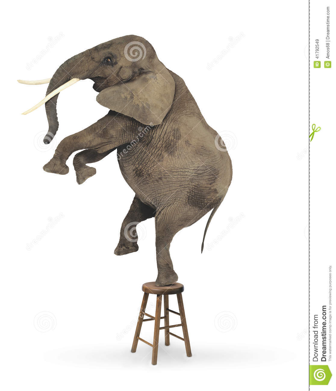 Elephant Acrobat Stock Illustration Image 41792549