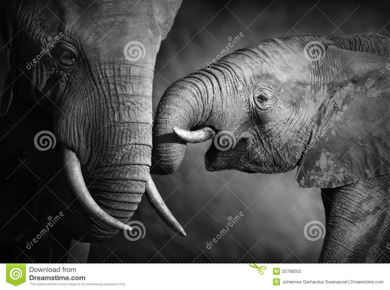 Elephant affection (Artistic processing)