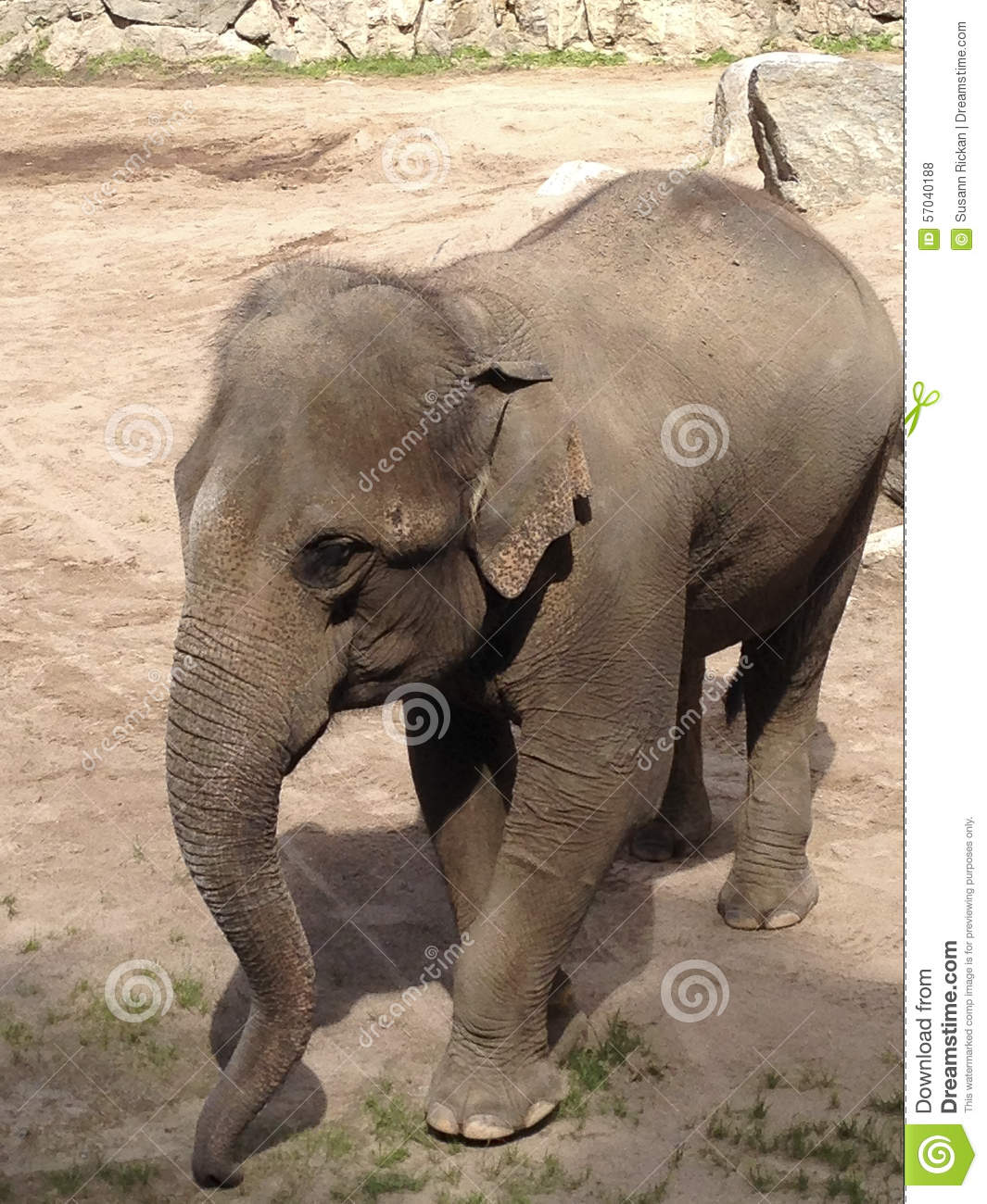 the stress of confinement to wild animals Sarily involve keeping animals in confinement, while at times studies involving  wild animals require that provision is made for trapping and  in research or  teaching involve exposure to painful, stressful or noxious stimuli.