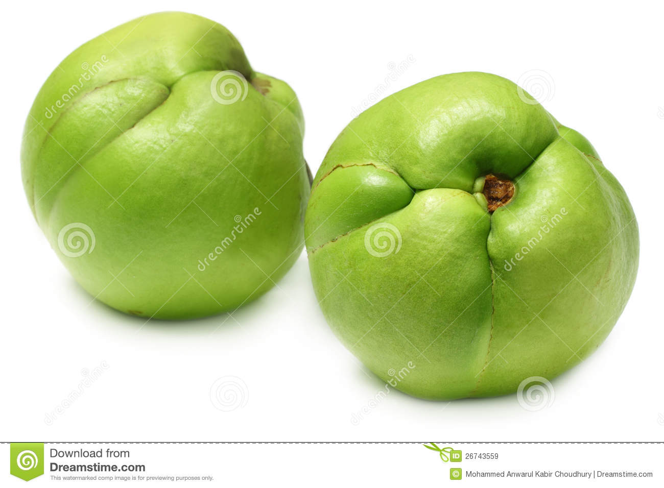 elephant apple or chalta of south east asia royalty free stock images
