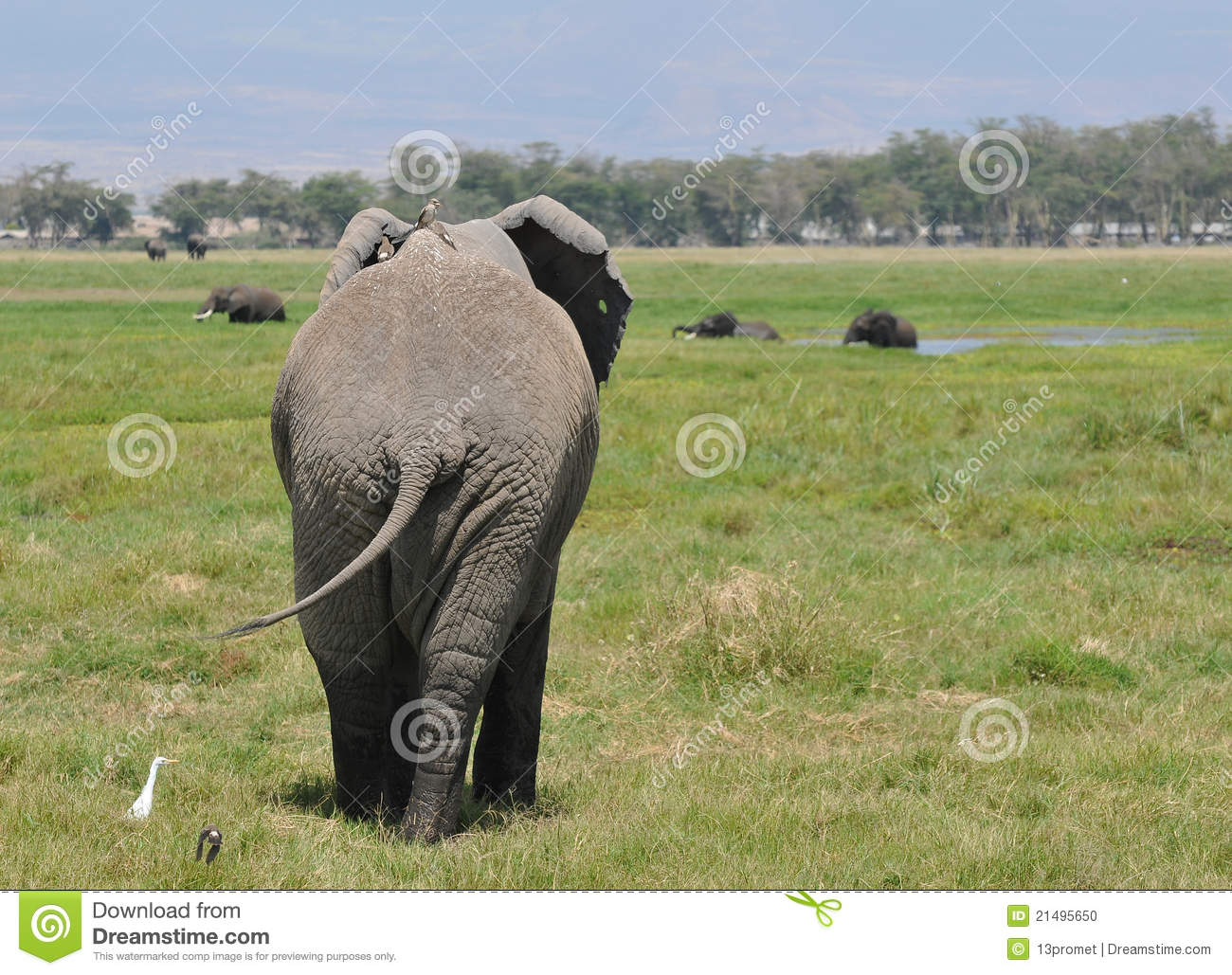 elephant back with birds