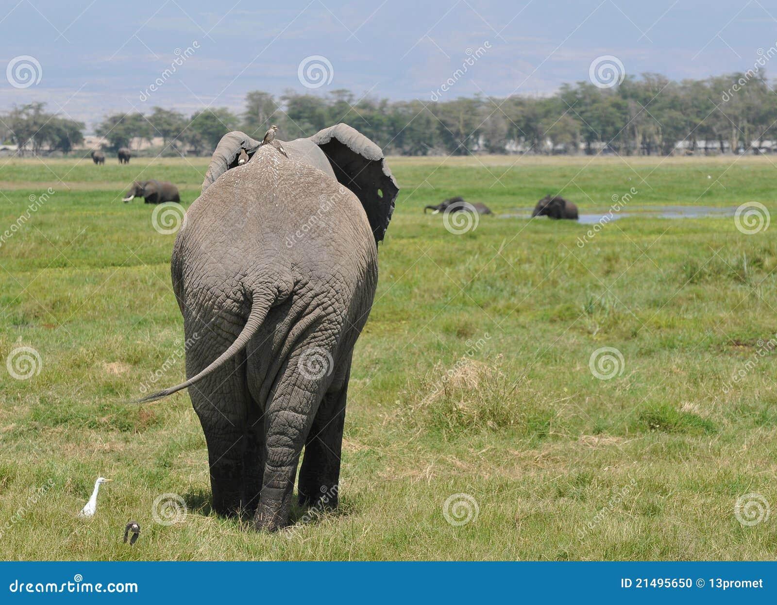 elephant back with birds