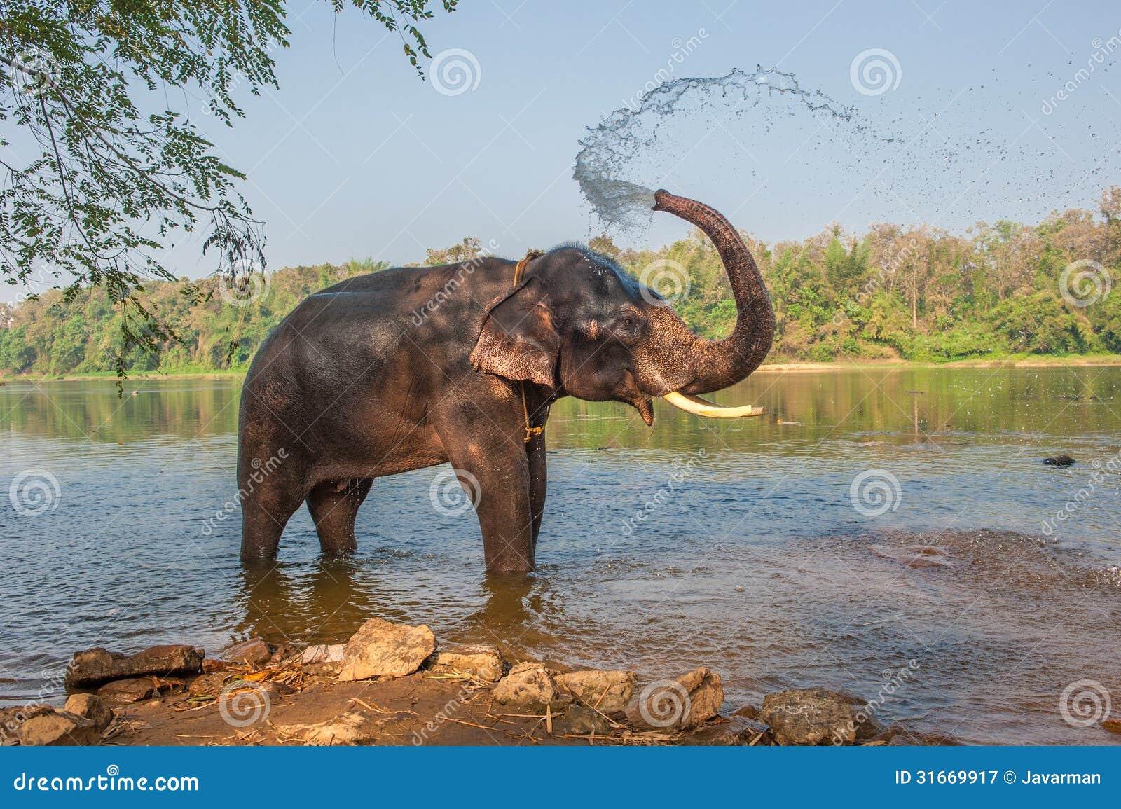 Elephant Bathing, Kerala, India Royalty Free Stock Photography - Image ...