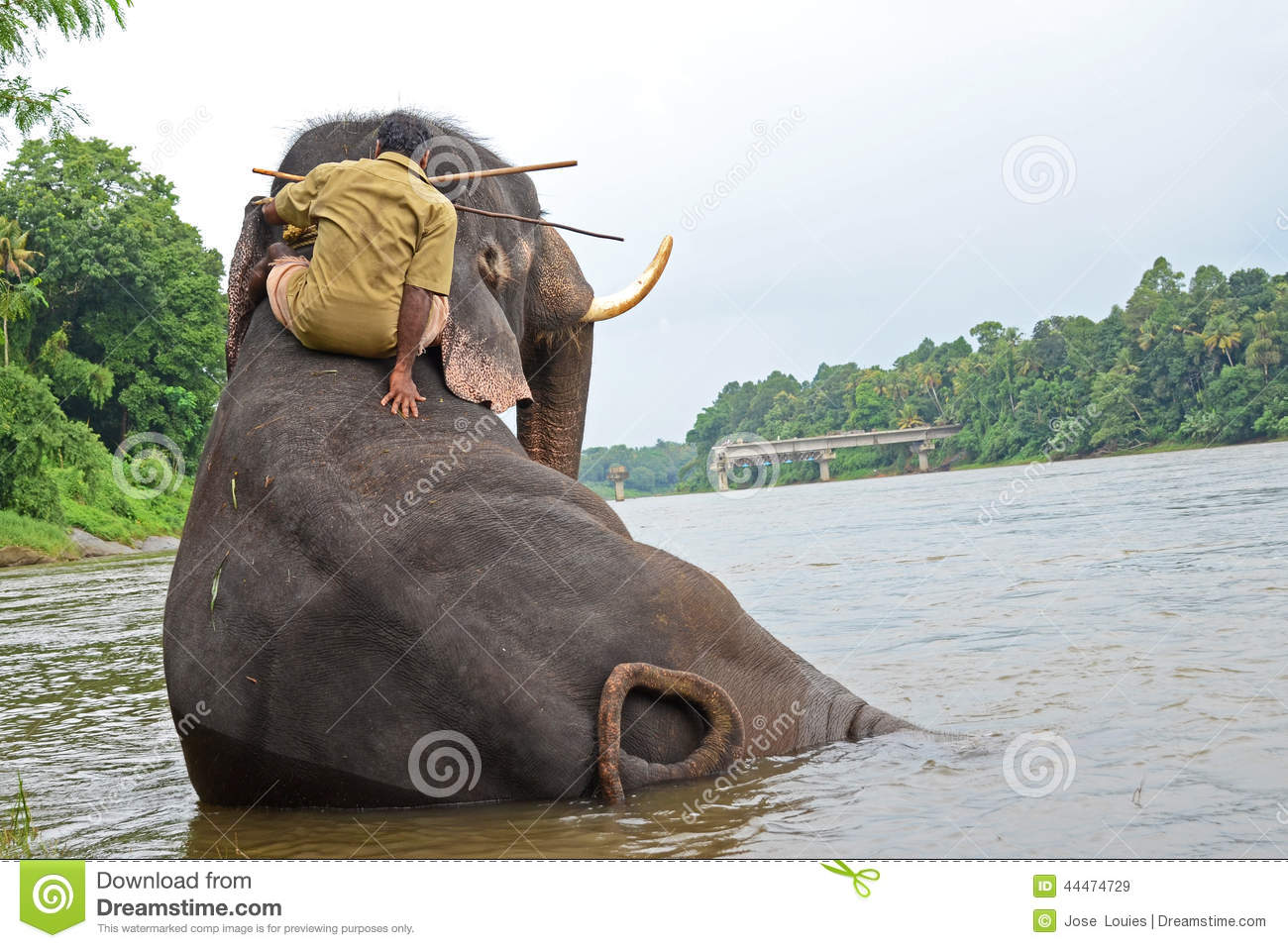 Elephant Bathing In Nepal Stock Photo - Image: 41681311