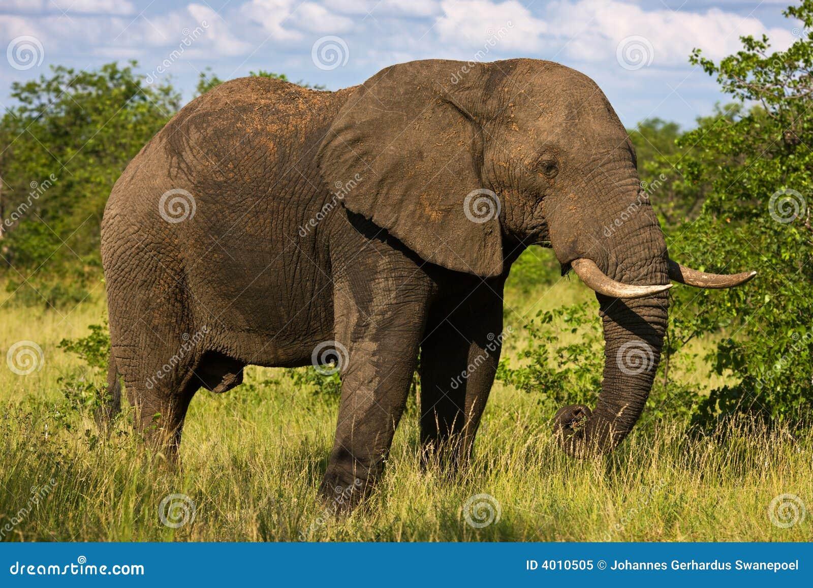 - elephant-bull-4010505