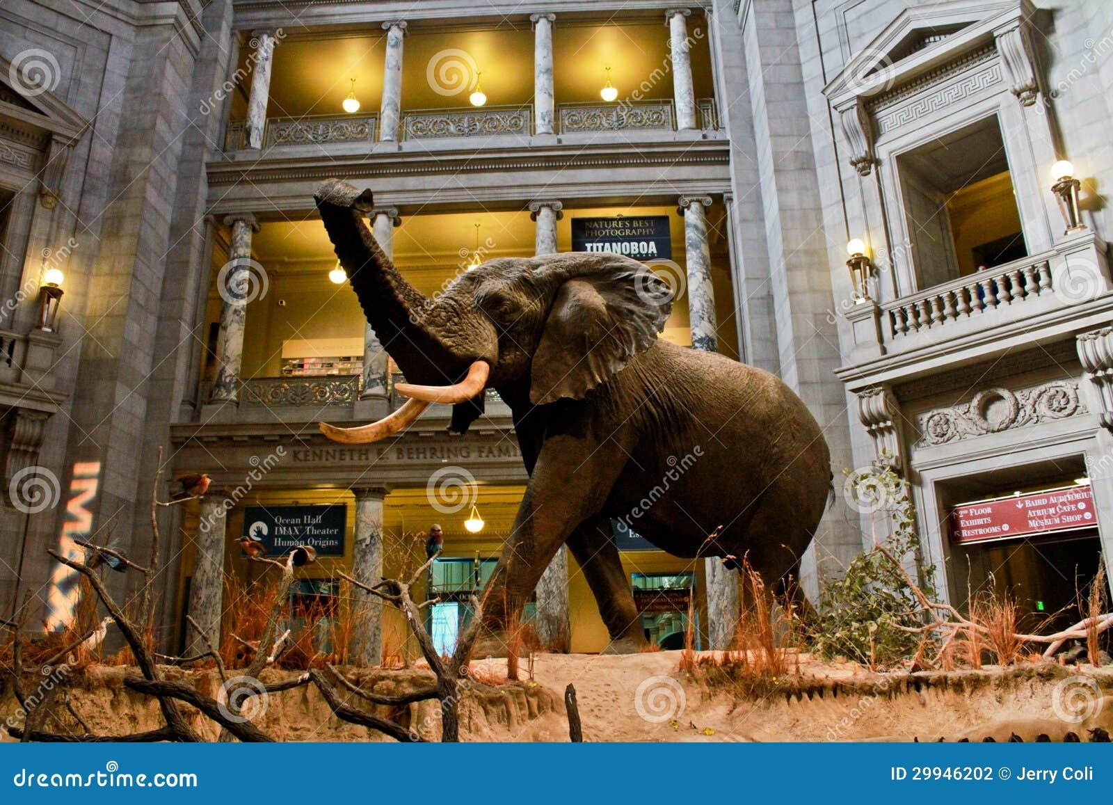Natural History Museum Dc Displays