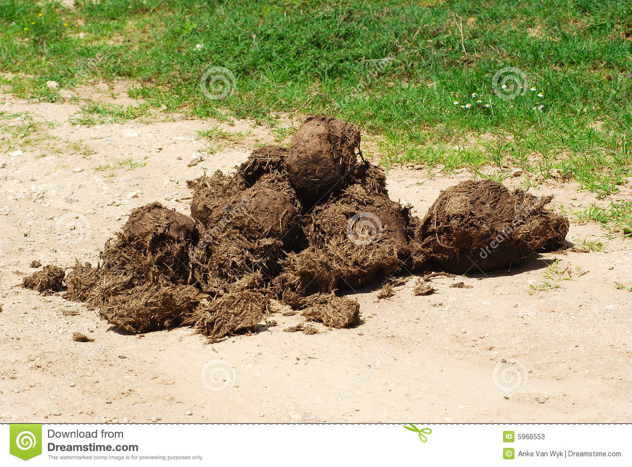 Elephant dung stock image. Image of feces, heap ...