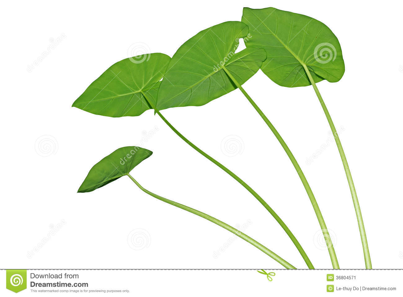 how to cook taro leaves