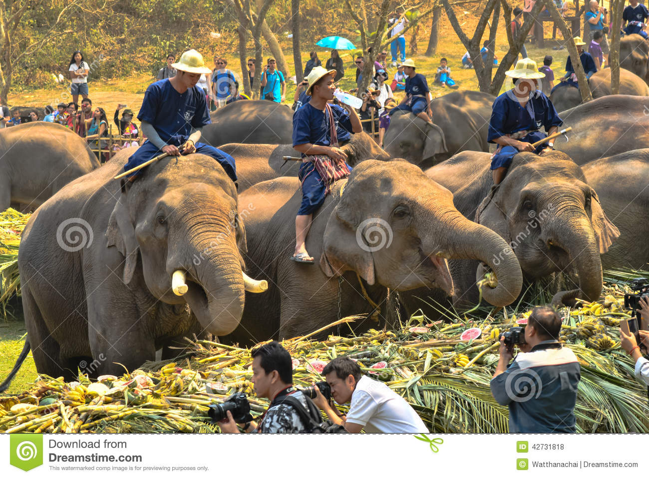 March 13: the day of the elephant in Thailand, the day of Pluto in the USA (Illinois). Holidays March 13 21