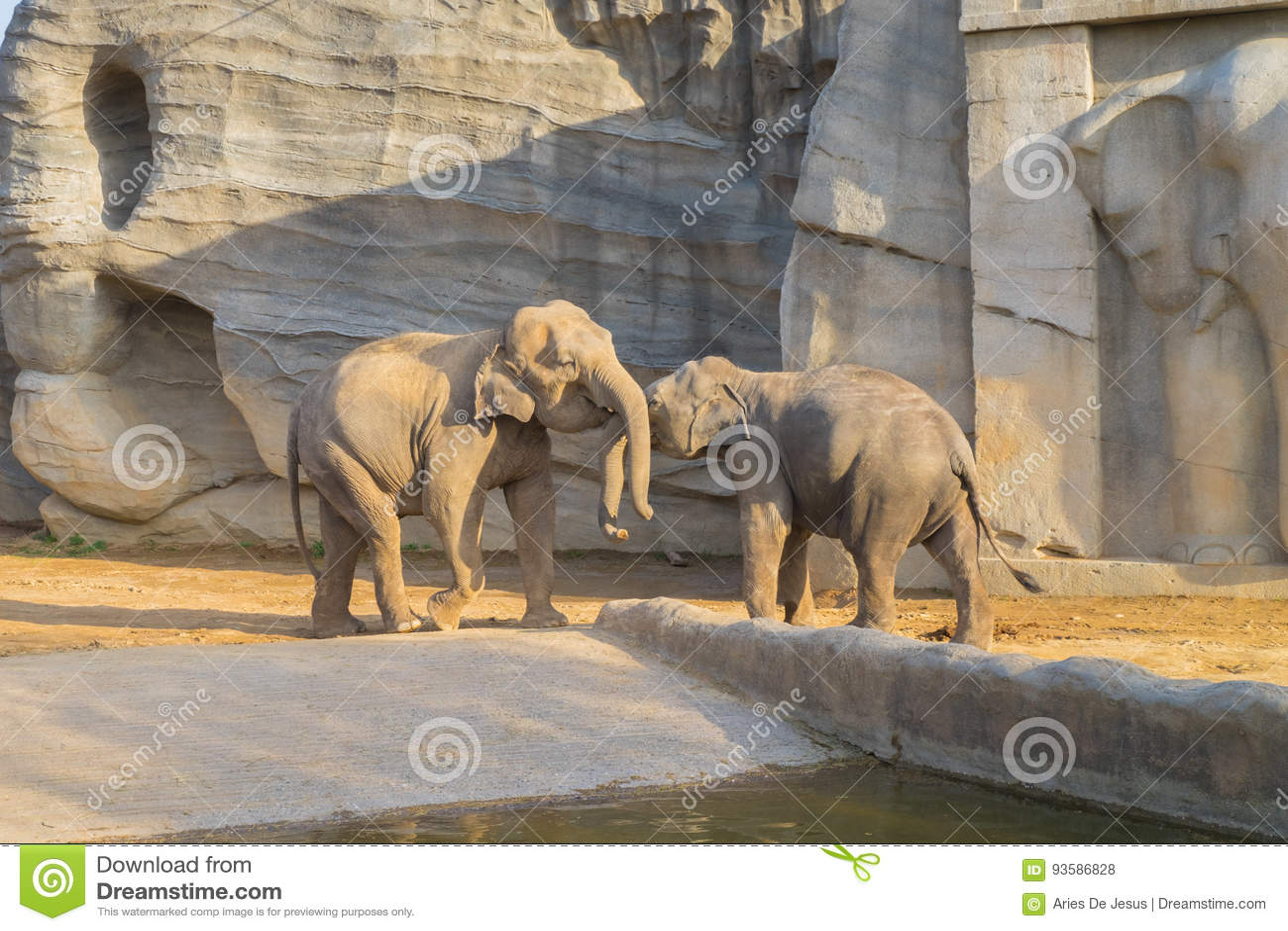 Elephant in Everland Zoo