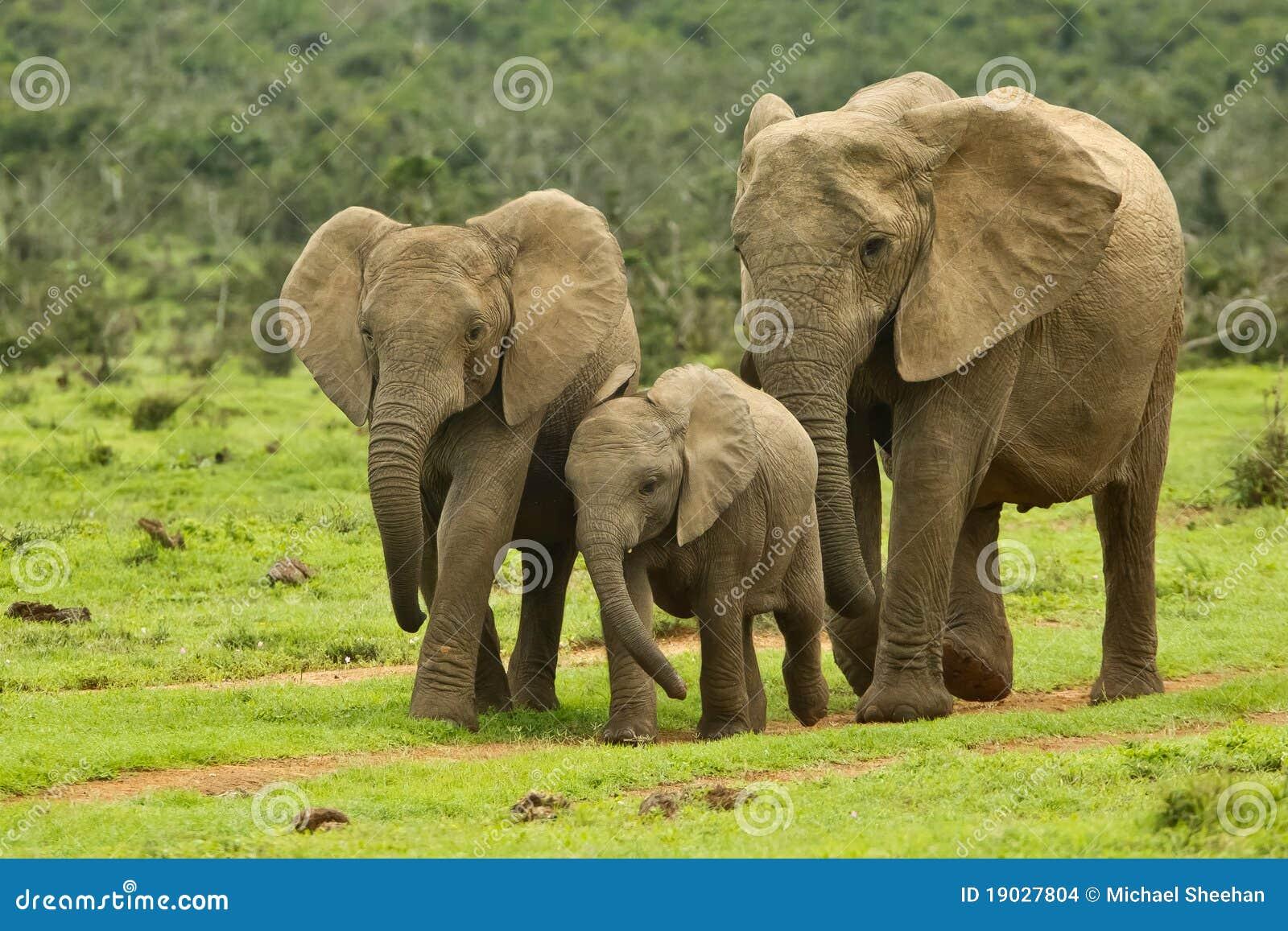 elephant-family-19027804.jpg