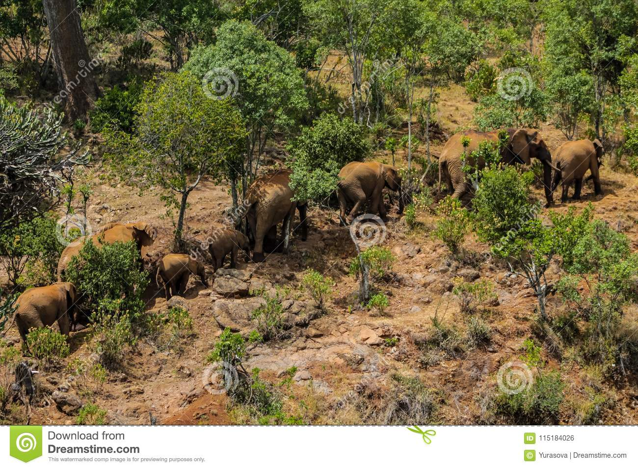 Elephant family in Africa wild nature life