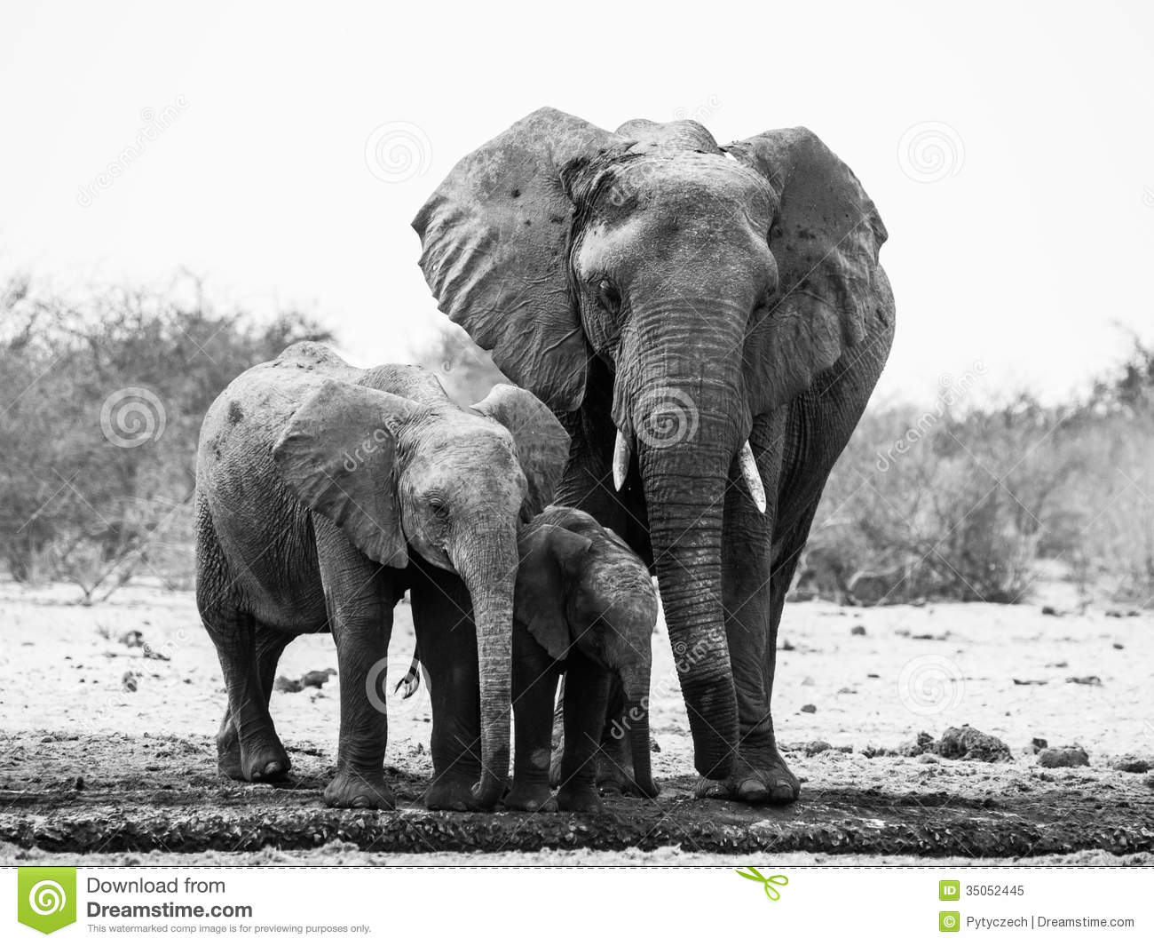 elephant family in black and white stock image image of national loxodonta 35052445. Black Bedroom Furniture Sets. Home Design Ideas