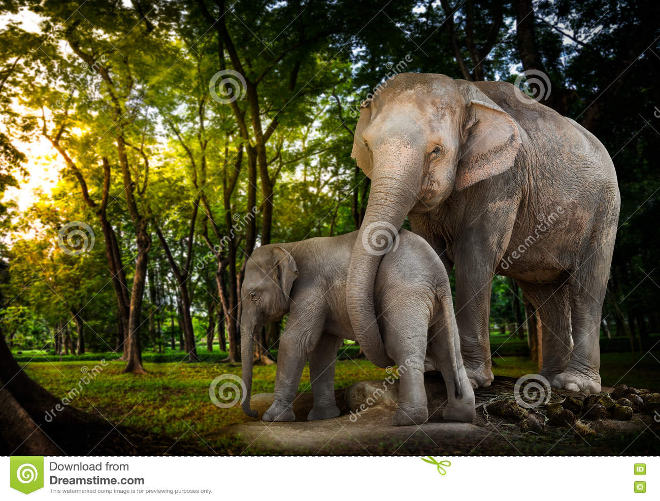 Elephant family in forest