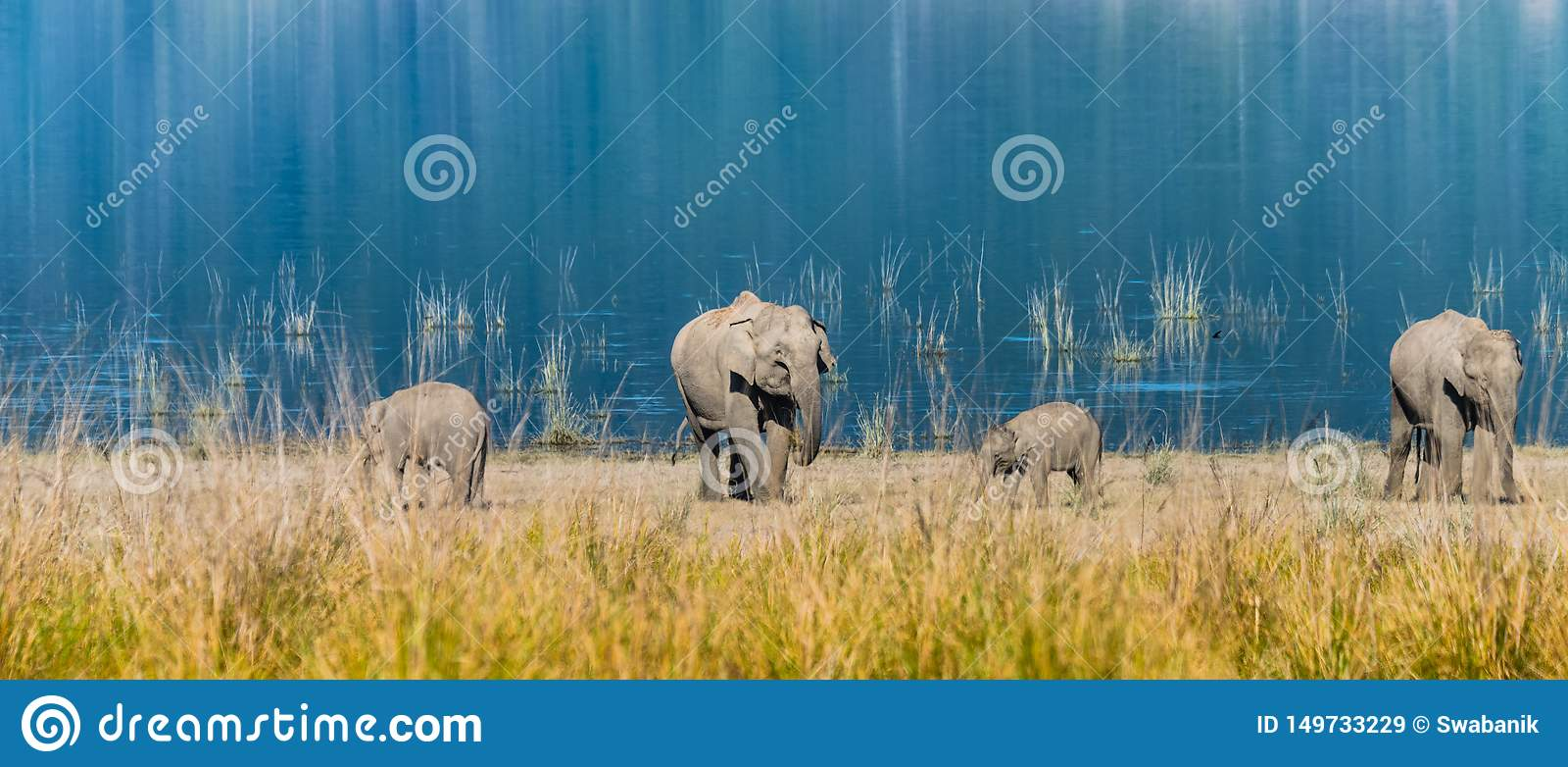 Elephant family at Grassland of Jim Corbett