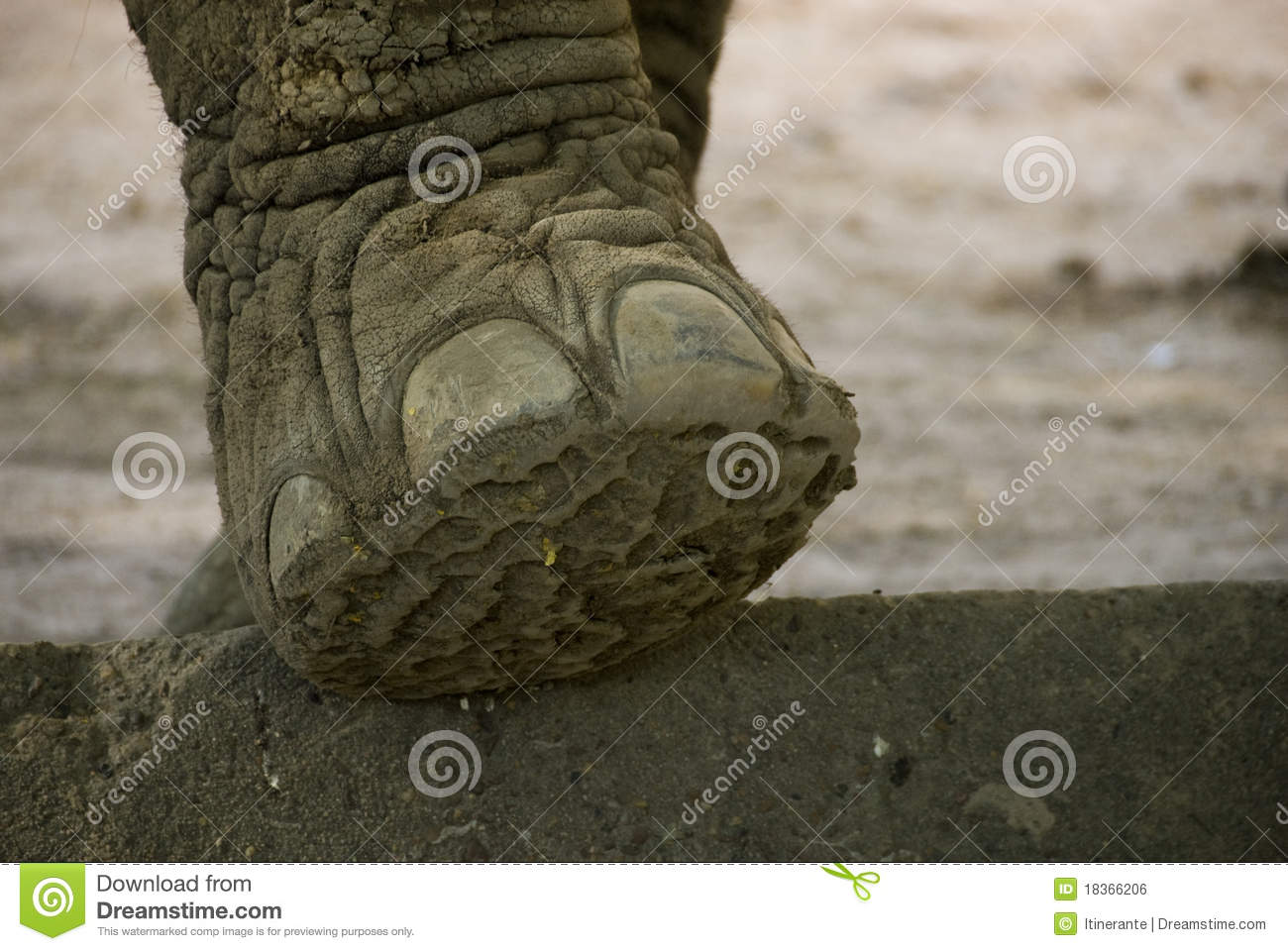 Elephant foot stock photo. Image of outside, shadow, mammal - 18366206