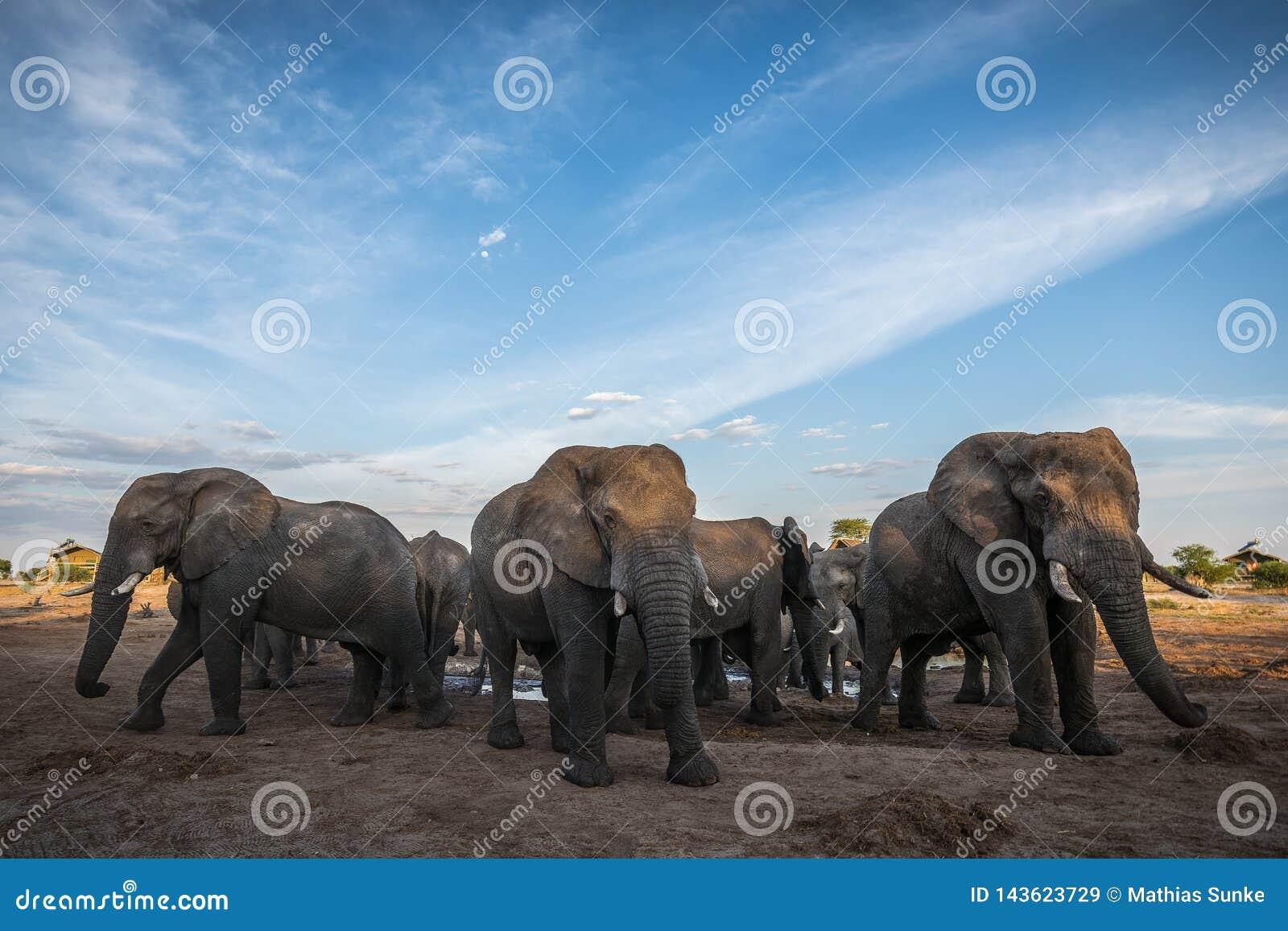 Elephant gathering at a waterhole