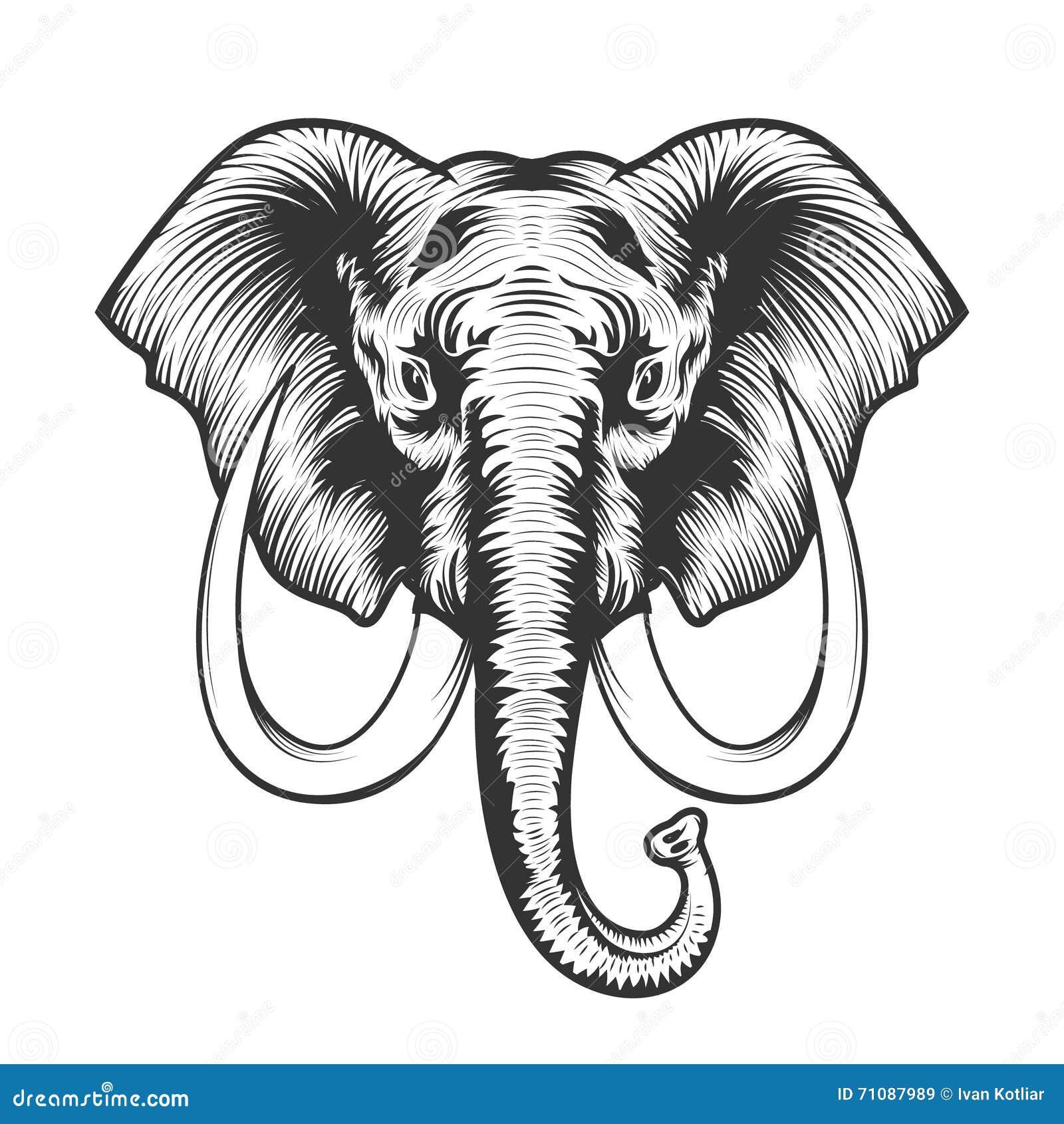 Elephant Head Illustration. Stock Vector - Illustration of dangerous ...