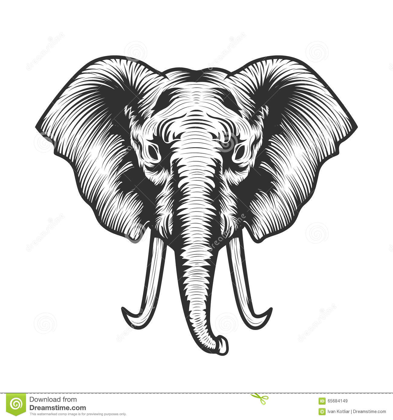 Large African Elephant Head Stock Illustrations – 666 Large African ...