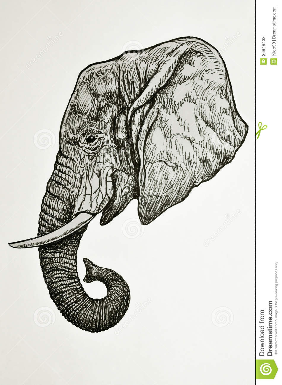 Elephant Head Side View Stock Illustration Illustration Of