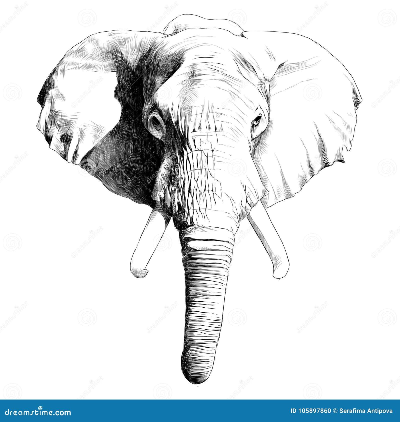 Elephant head sketch vector