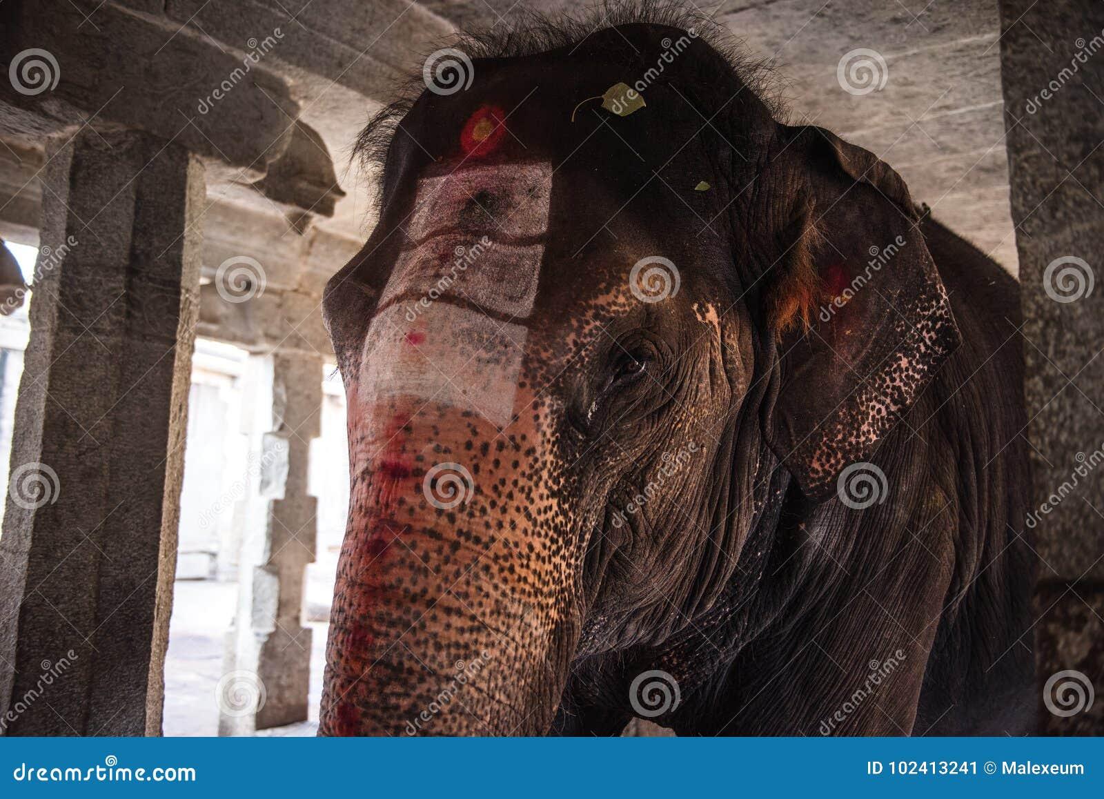 Elephant in a Hindu Virupaksha Temple.