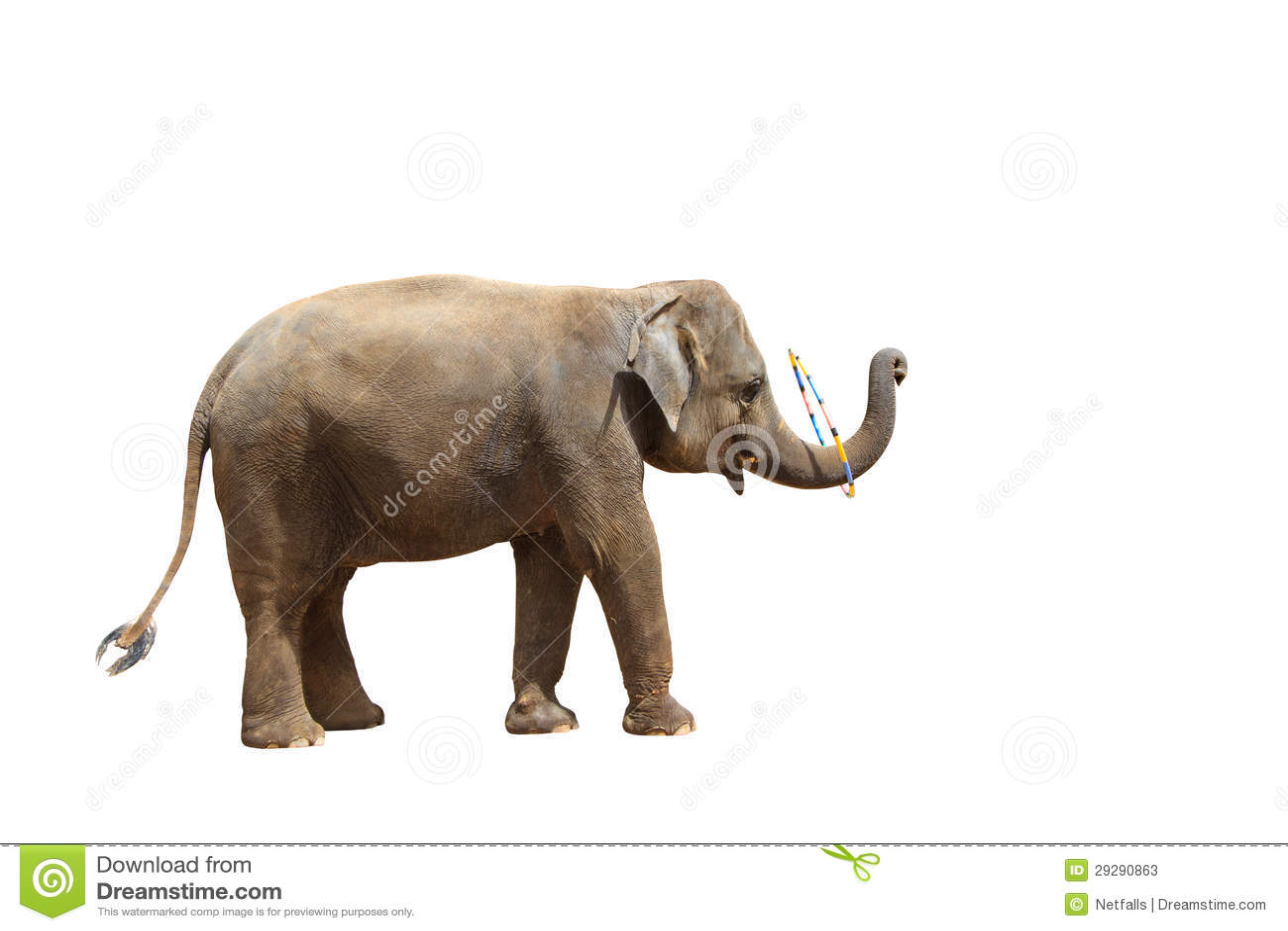 Elephant isolated white background stock photos image 29290863 - Image elephant ...