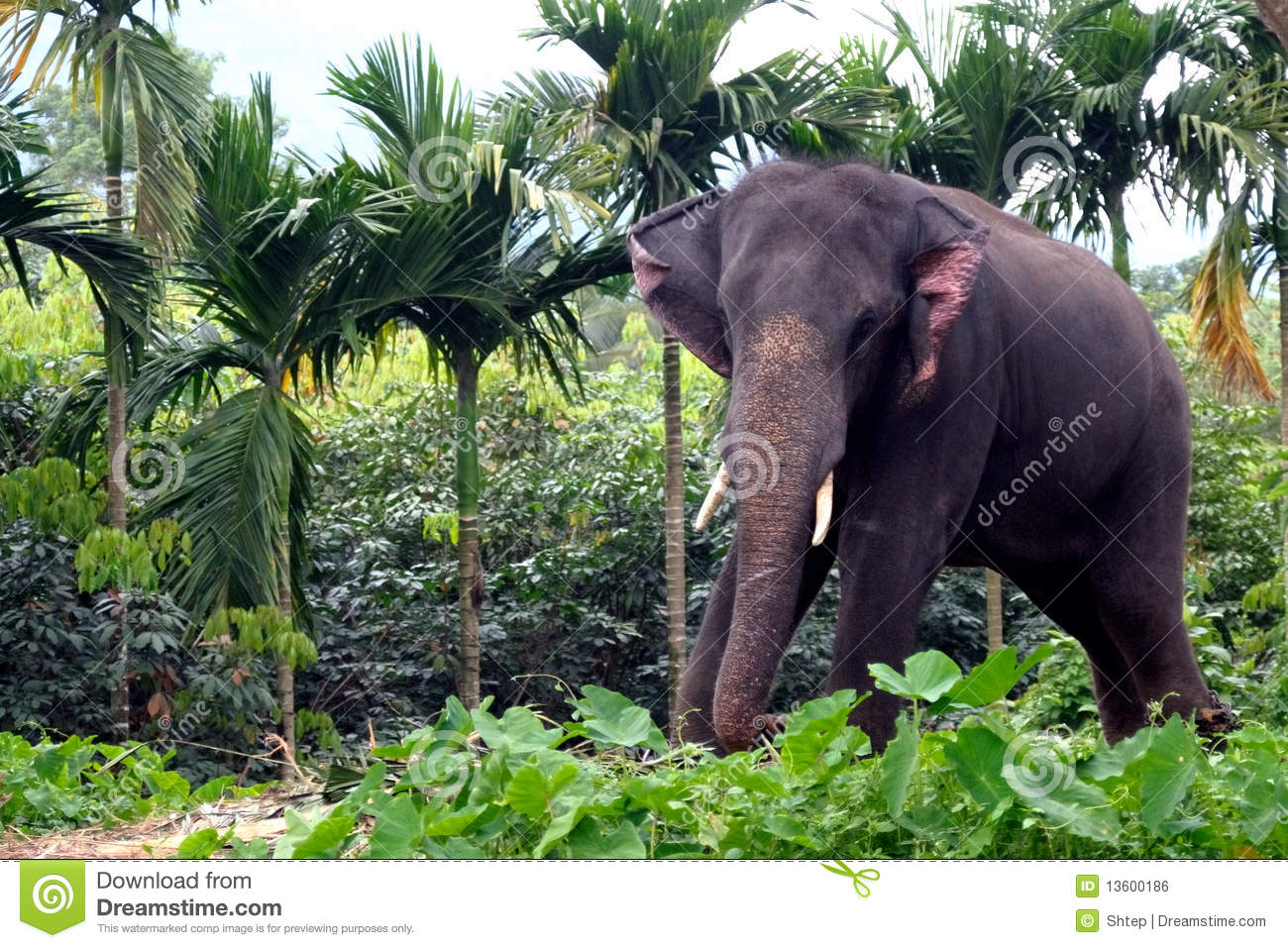 What an elephant&#39