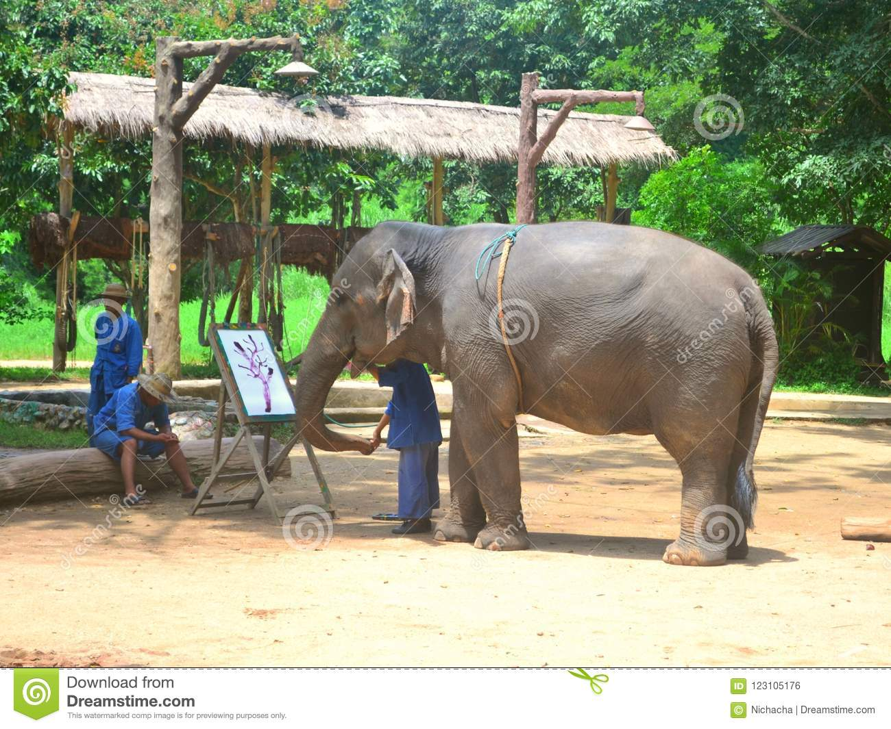 The Elephant And Mahout In The Show