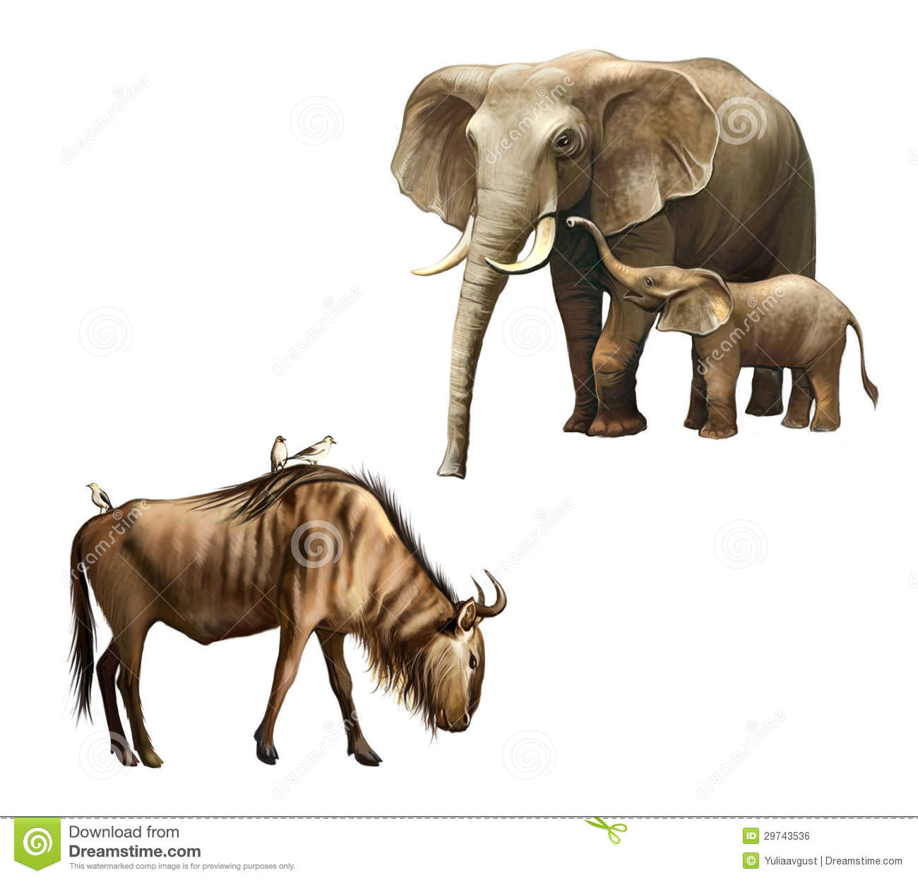 Elephant Family Mother And Baby Baby Wildebeest With