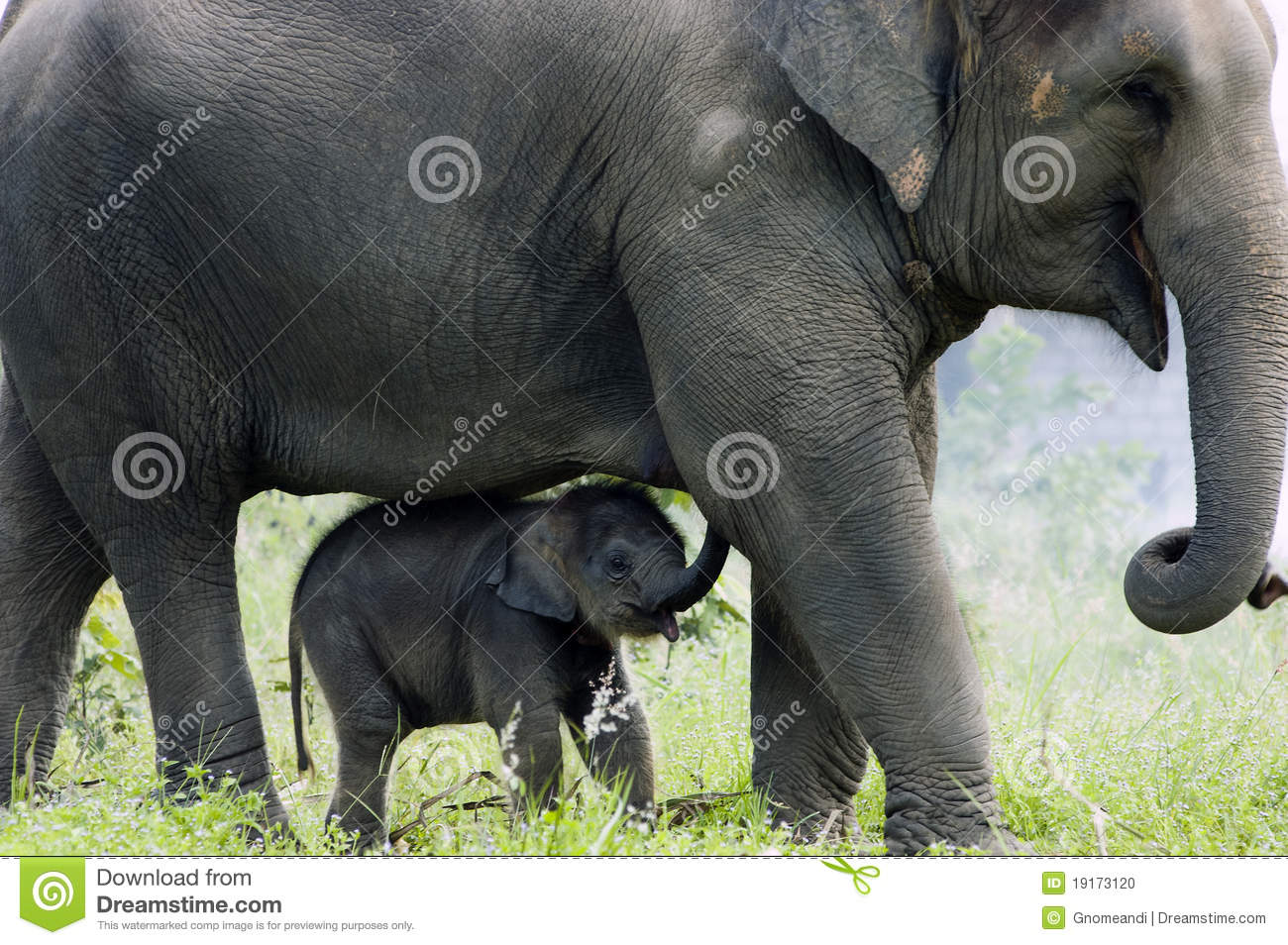 mother and baby elephant relationship