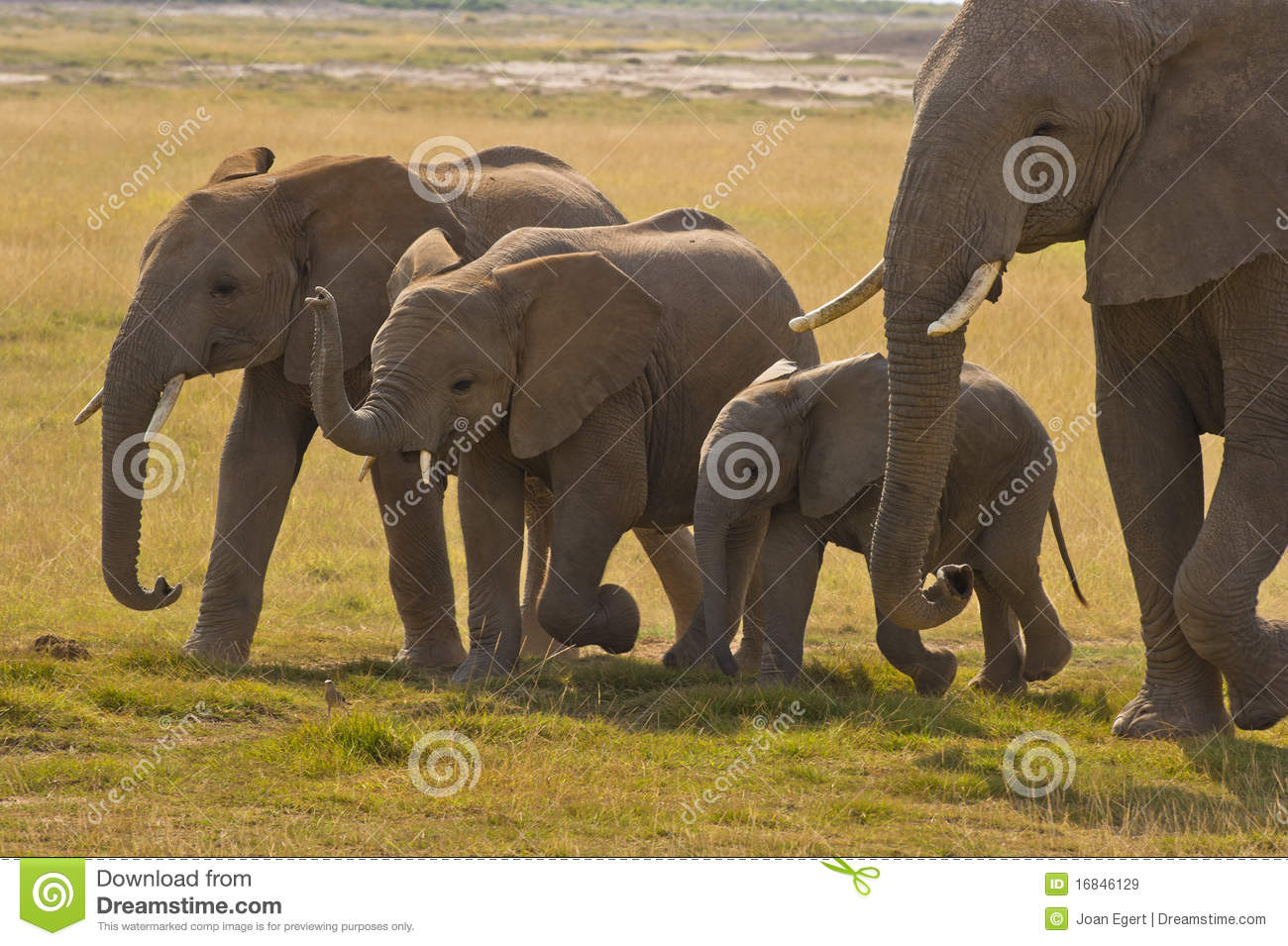 Elephant mother and her three children