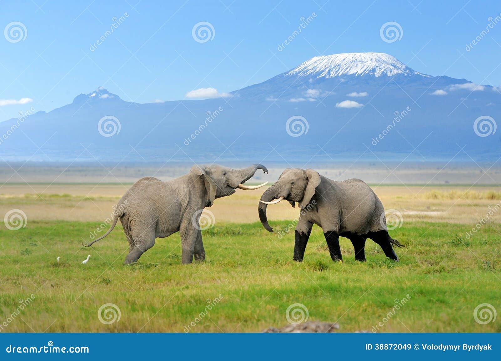 elephant with mount kilimanjaro stock photo image 38872049